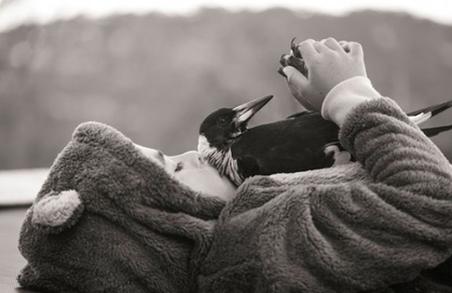 """Сорока по кличке """"Пингвин"""" стал лучшим другом маленького мальчика"""